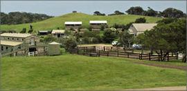 Ace Hi Riding Ranch - Accommodation Batemans Bay