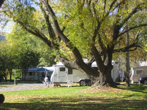 Tumbarumba Creek Caravan Park - Accommodation Batemans Bay