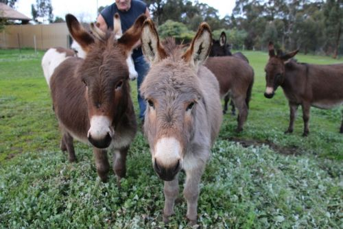 Donkey Tales Farm Cottages - Accommodation Batemans Bay