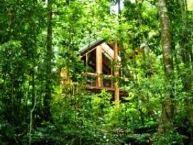 Fur'N'Feathers Rainforest Tree Houses - Accommodation Batemans Bay