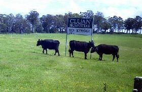 Cluan Homestead - Accommodation Batemans Bay