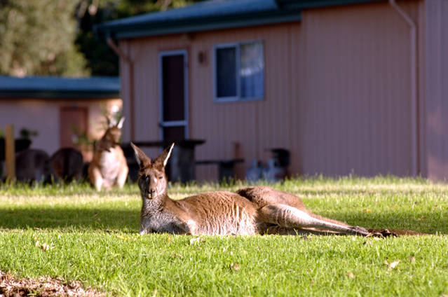 Kalgan River Chalets  Caravan Park - Accommodation Batemans Bay