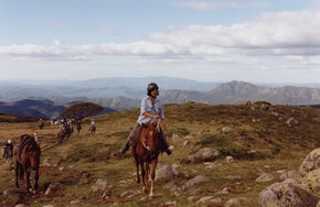 High Country Horses - Accommodation Batemans Bay