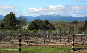Buller View Wines - Accommodation Batemans Bay
