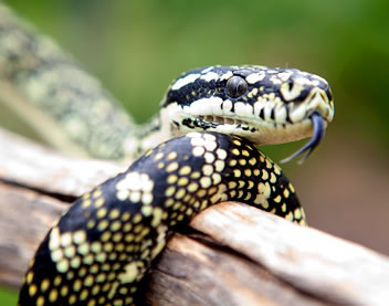 Reptile Encounters - Accommodation Batemans Bay