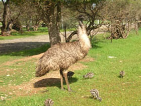 Minlaton Fauna Park - Accommodation Batemans Bay