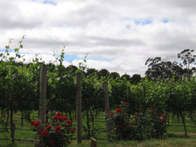 Manyara Vineyard - Accommodation Batemans Bay
