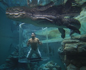 Crocosaurus Cove - Accommodation Batemans Bay