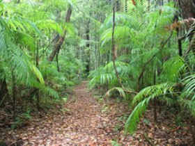 Delicia Road Conservation Park - Accommodation Batemans Bay