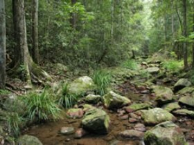 Amamoor State Forest - Accommodation Batemans Bay