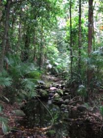 Mossman Gorge Rainforest Circuit Track Daintree National Park - Accommodation Batemans Bay