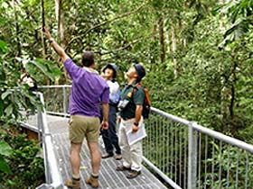 Daintree Discovery Centre - Accommodation Batemans Bay