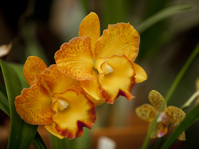 Queens Park - Orchid House - Accommodation Batemans Bay