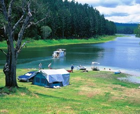 Danbulla National Park and Danbulla State Forest - Accommodation Batemans Bay
