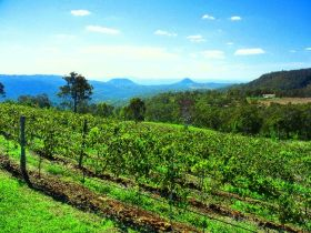 Preston Peak Wines - Accommodation Batemans Bay