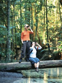 Birdwatching on the Fraser Coast - Accommodation Batemans Bay