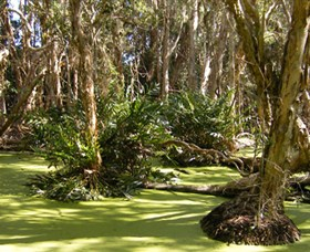Arkarra Lagoons and Tea Gardens - Accommodation Batemans Bay