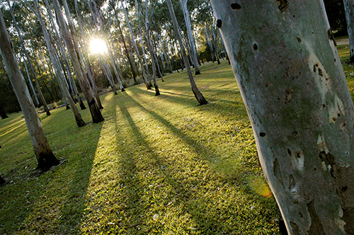 Tondoon Botanic Gardens - Accommodation Batemans Bay