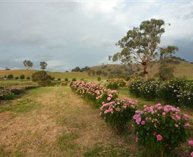 Damasque Rose Oil Farm - Accommodation Batemans Bay