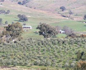 Wymah Organic Olives and Lambs - Accommodation Batemans Bay
