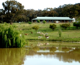 Clearview Alpacas - Accommodation Batemans Bay