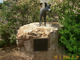 Dingo Statue - Accommodation Batemans Bay
