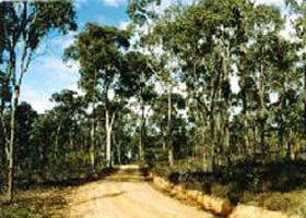 Paddys Ranges State Park - Accommodation Batemans Bay