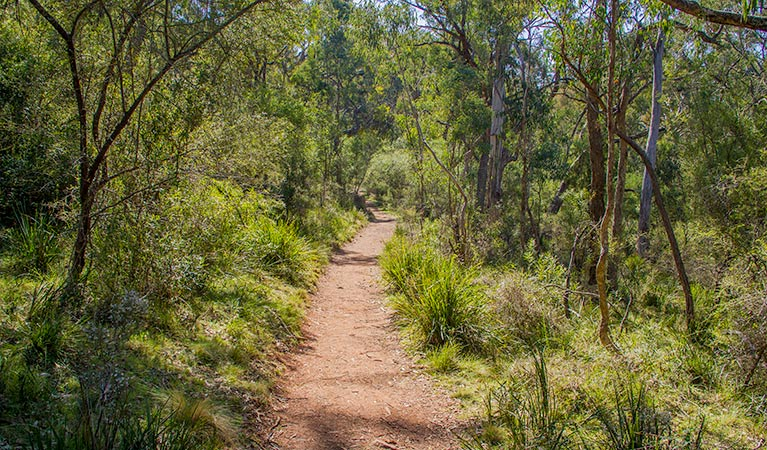 Mares Forest Creek walking track - Accommodation Batemans Bay