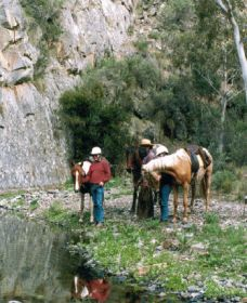 Yarramba Horse Riding - Accommodation Batemans Bay