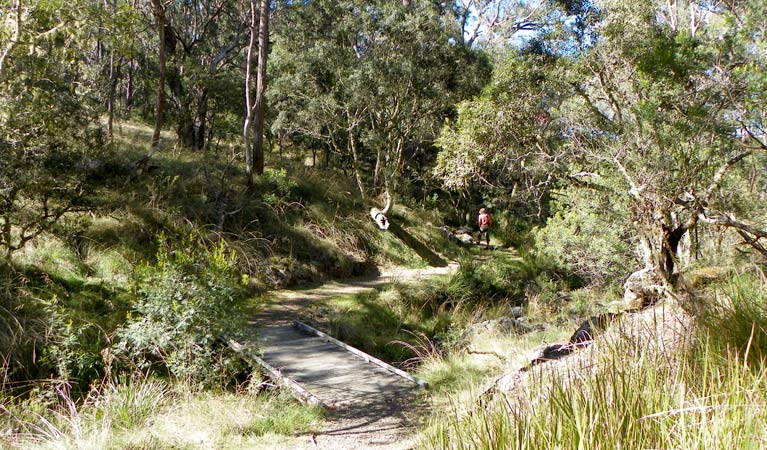 Wollomombi walking track - Accommodation Batemans Bay