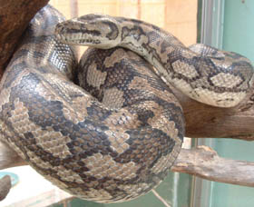 Armadale Reptile Centre - Accommodation Batemans Bay