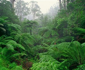 Tarra Bulga National Park - Accommodation Batemans Bay