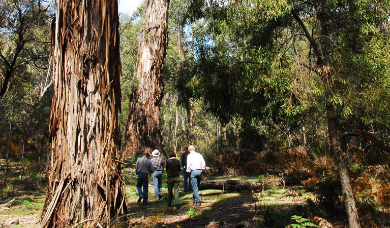 Tallaganda National Park - Accommodation Batemans Bay