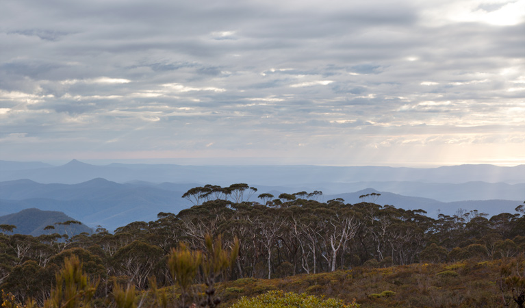 Mount Budawang trail - Accommodation Batemans Bay