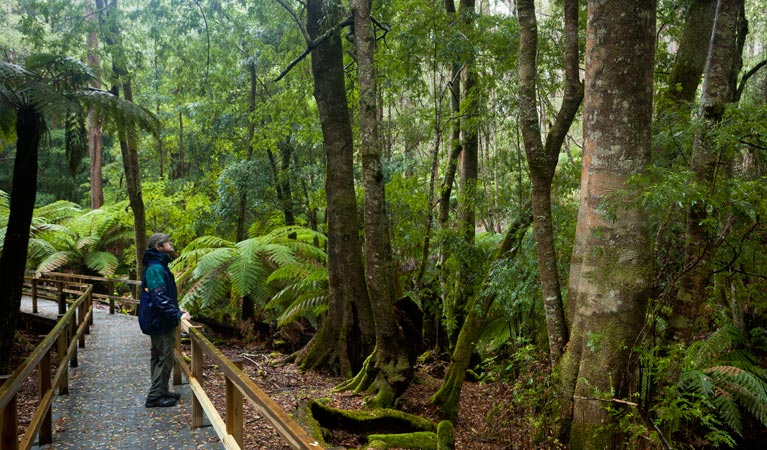 Monga National Park - Accommodation Batemans Bay