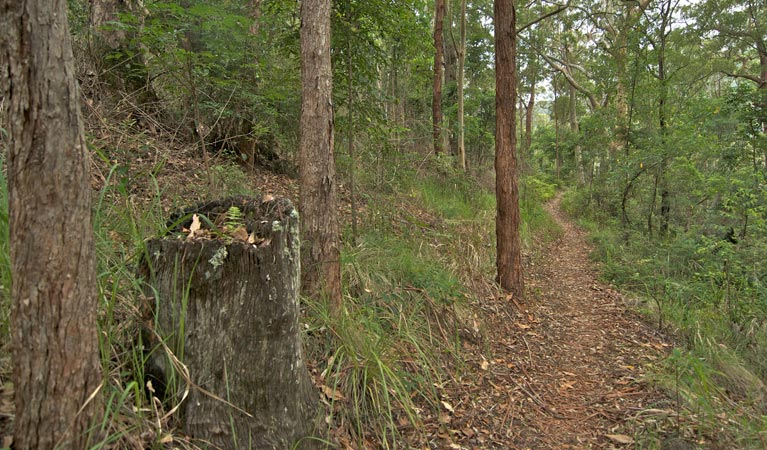 Border loop walk - Accommodation Batemans Bay