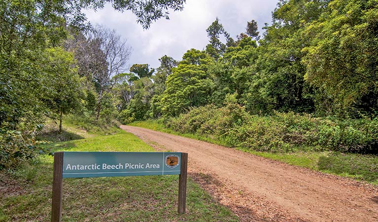 Antarctic Beech picnic area - Accommodation Batemans Bay