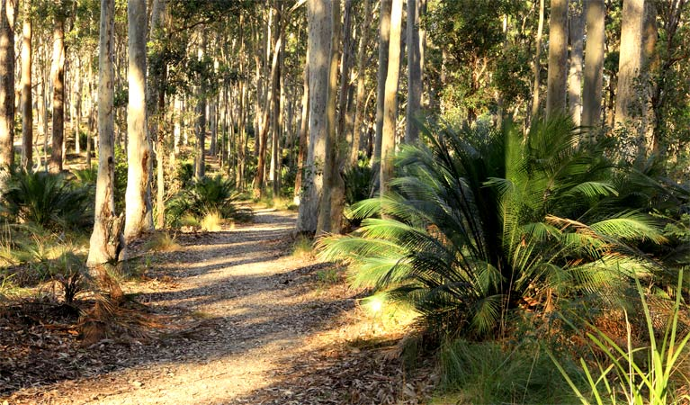Square Head track 2 - Accommodation Batemans Bay