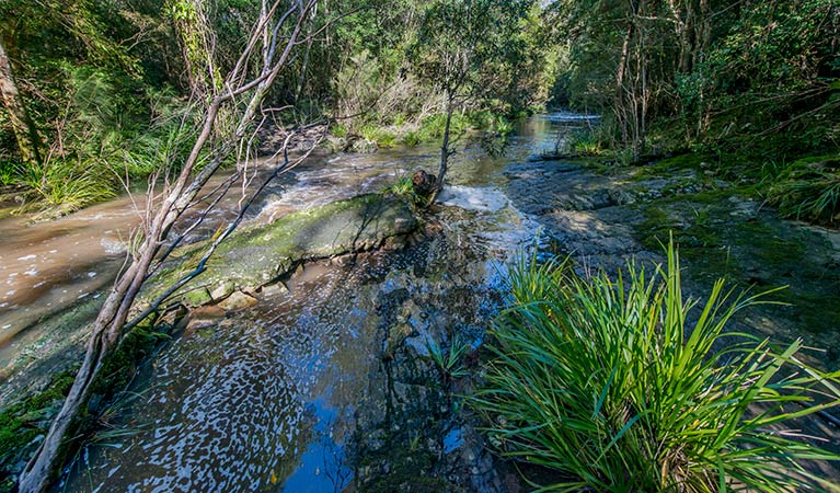 Dawson River walking track - Accommodation Batemans Bay