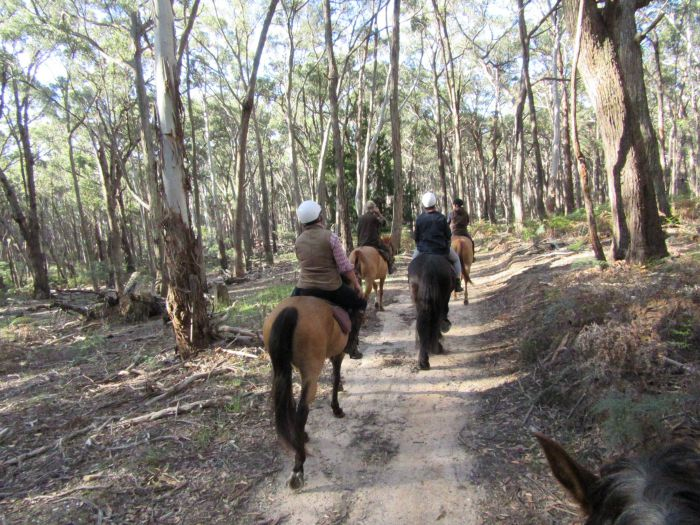 Silver Brumby Trails - Accommodation Batemans Bay