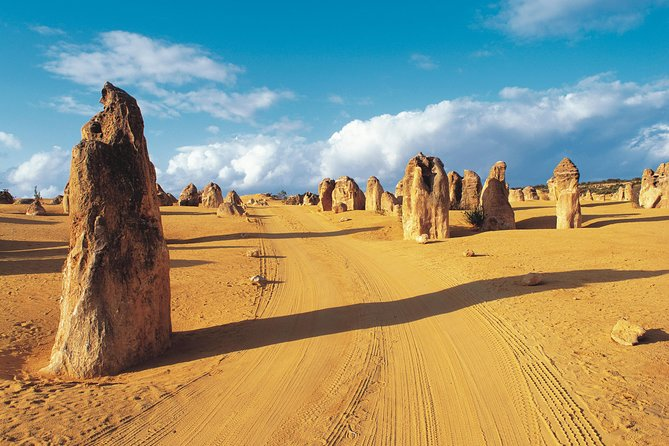 Pinnacles Desert Koalas and Sandboarding 4WD Day Tour from Perth - Accommodation Batemans Bay