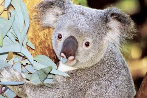Perth Zoo General Entry Ticket and Sightseeing Cruise - Accommodation Batemans Bay