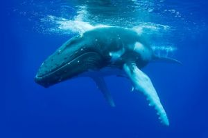 Dunsborough Whale Watching Eco Tour - Accommodation Batemans Bay