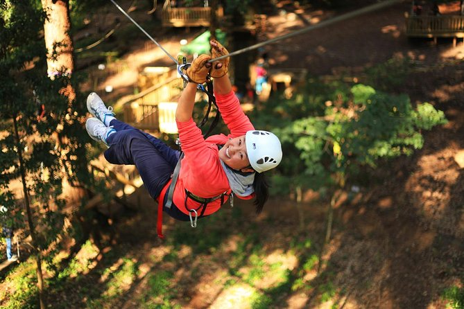 Trees Adventure Lane Poole Park - Treetop  Zipline Experience - Accommodation Batemans Bay