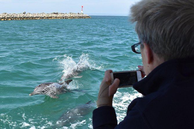 Mandurah Dolphin Island Adventure - Accommodation Batemans Bay