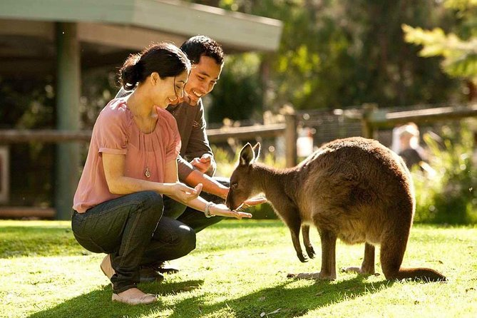 Very Best of Perth Tour - Wildlife Park  City Highlights Tour - Accommodation Batemans Bay