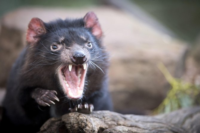 Port Arthur and Tassie Devils Active Day Tour from Hobart - Accommodation Batemans Bay