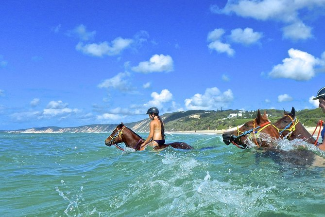 Horse Swimming Ride from Rainbow Beach