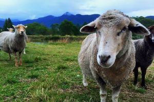 Trevena Glen Farm Animal Experience - Accommodation Batemans Bay