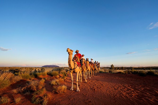 Uluru Camel Express Sunrise or Sunset Tours - Accommodation Batemans Bay
